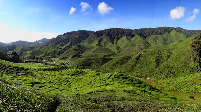 The Cameron Highlands is one of Malaysia's most extensive hill stations.