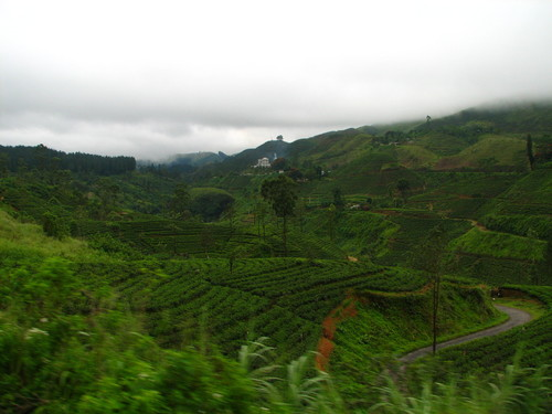 sri-lanka-tea-farm2