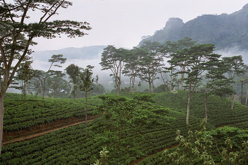 sri-lanka-tea-plantation-02