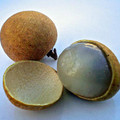 longan-fruits_md